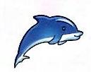 深圳市海豚跨境科技有限公司 最新采购和商业信息