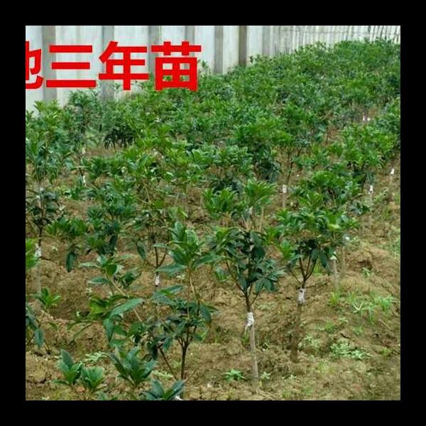刘项宇 最新采购和商业信息