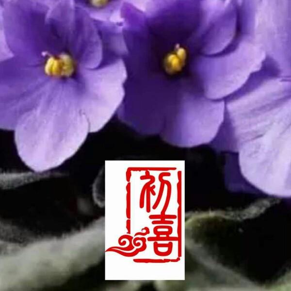 江苏萍 最新采购和商业信息