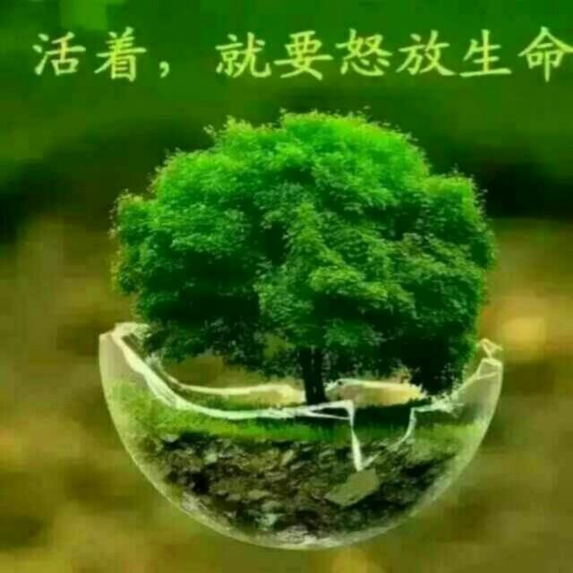 袁磊浪 最新采购和商业信息