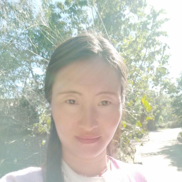 刘英 最新采购和商业信息