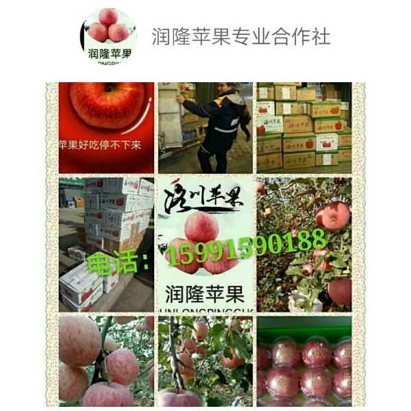 润隆野枫塬牌苹果 最新采购和商业信息