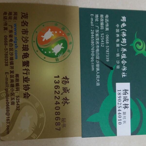 来自杨成林发布的招商投资信息:龟鳖养殖... - 茂名市沙琅龟鳖行业协会