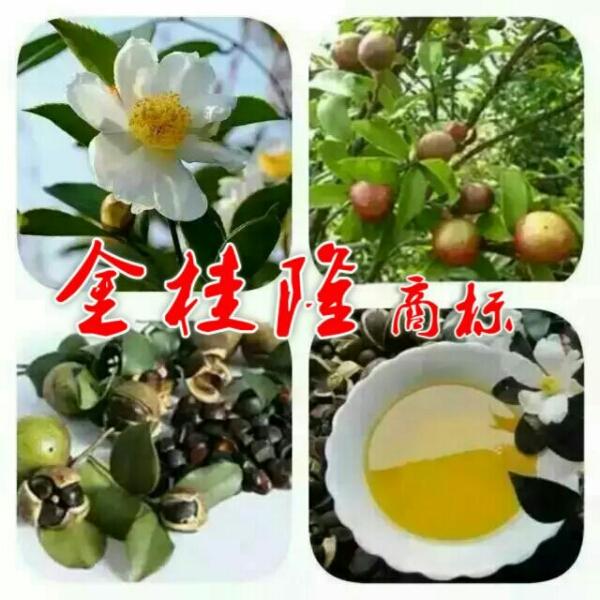来自李桂发布的商务合作信息:... - 漳平市利桂压榨山茶油店